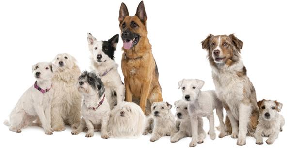 Ближайшая стрижка собак